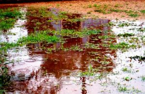 Puddles over septic field could mean a problem.
